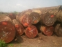 African Hardwood Logs Ready For sale