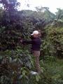 THE BEST ARTISAN COFFEE OF PUERTO RICO