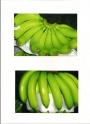 Class A Premium Cavendish Banana