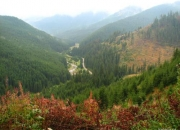 owner sell house, land and forest in Romania (best opportunity for investors, business p