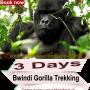 Come and Gorilla Trekking in Uganda or Rwanda